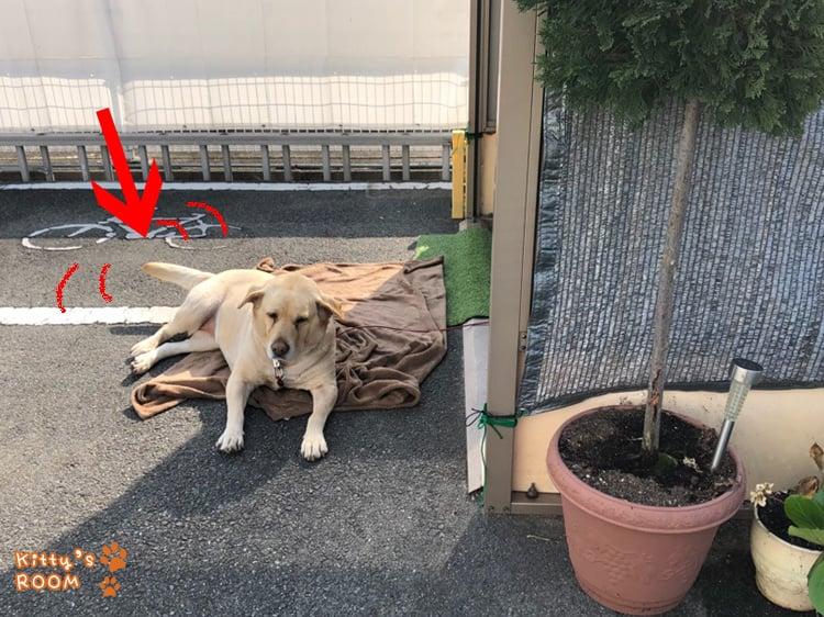 http://choku.co.jp/files/libs/1009/20180417163731360.jpg