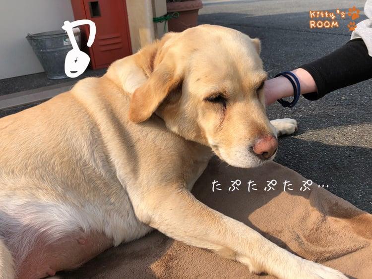 http://choku.co.jp/files/libs/1011/201804171637541524.jpg