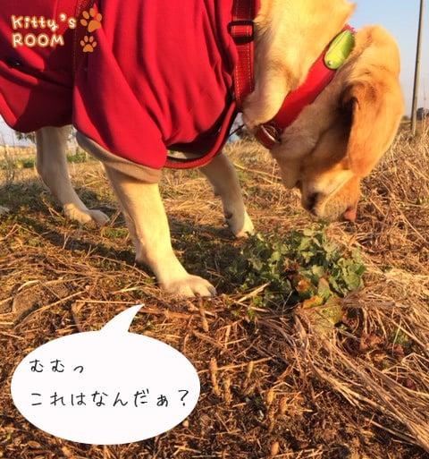 http://choku.co.jp/files/libs/693/201703131059491516.jpg