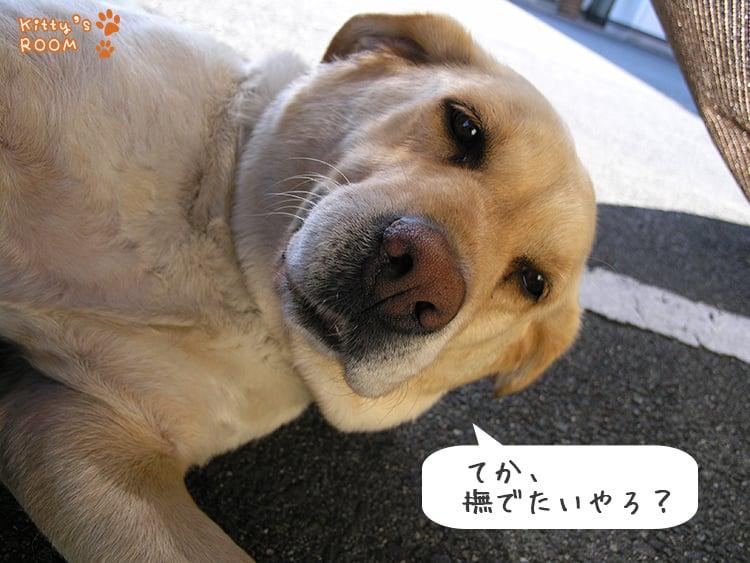 http://choku.co.jp/files/libs/774/201705261546107414.jpg