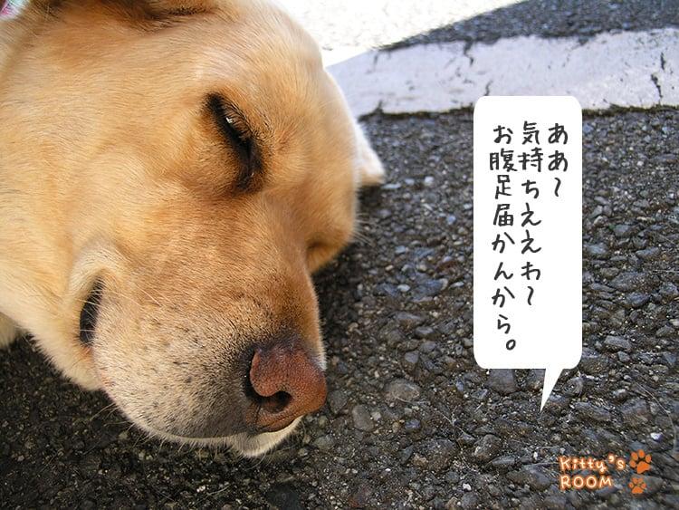 http://choku.co.jp/files/libs/775/201705261546116697.jpg