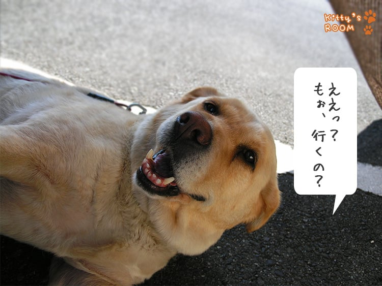 http://choku.co.jp/files/libs/776/20170526154613910.jpg