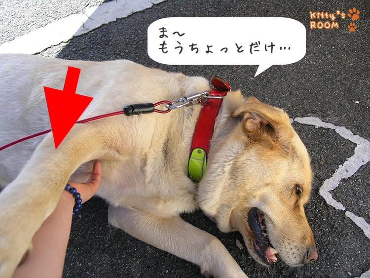 http://choku.co.jp/files/libs/777/201705261546141147.jpg