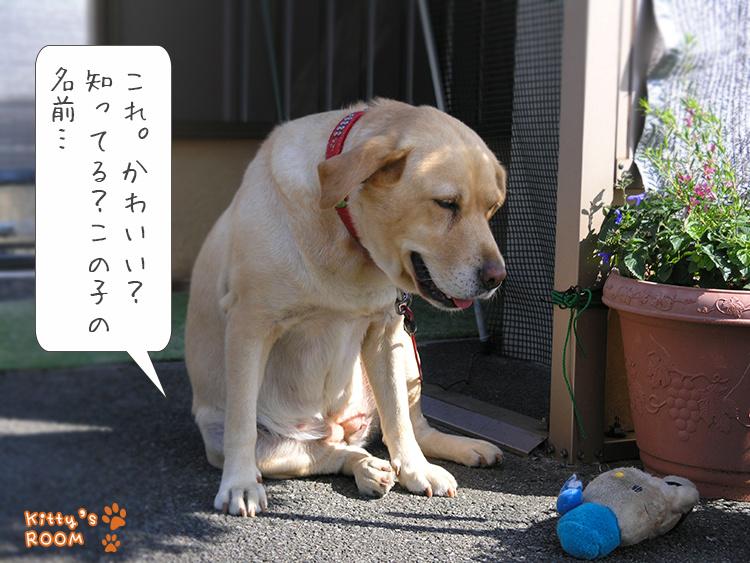 https://choku.co.jp/files/libs/1081/201810021559252059.jpg
