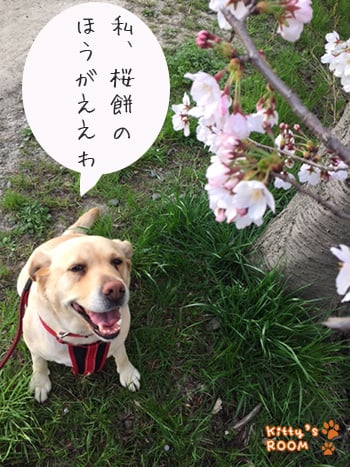 https://choku.co.jp/files/libs/746/201704131407274888.jpg